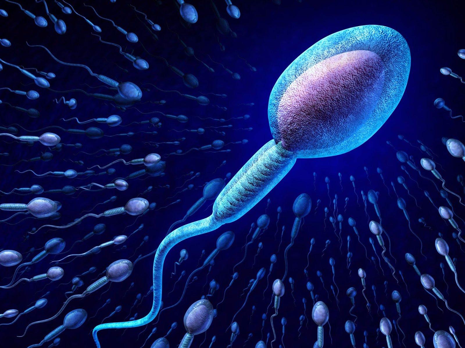 Resultado de imagen de esperma masculino 3d