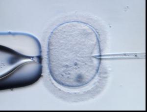 historia de la fertilización in vitro