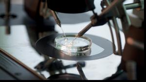 Costo de fecundación in vitro: ¿Cuál es el costo del tratamiento de fecundación in vitro en India?